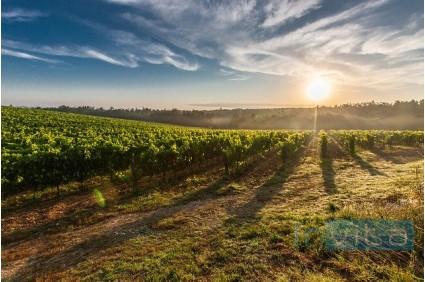 Zapuščina za kmetijsko zemljišče